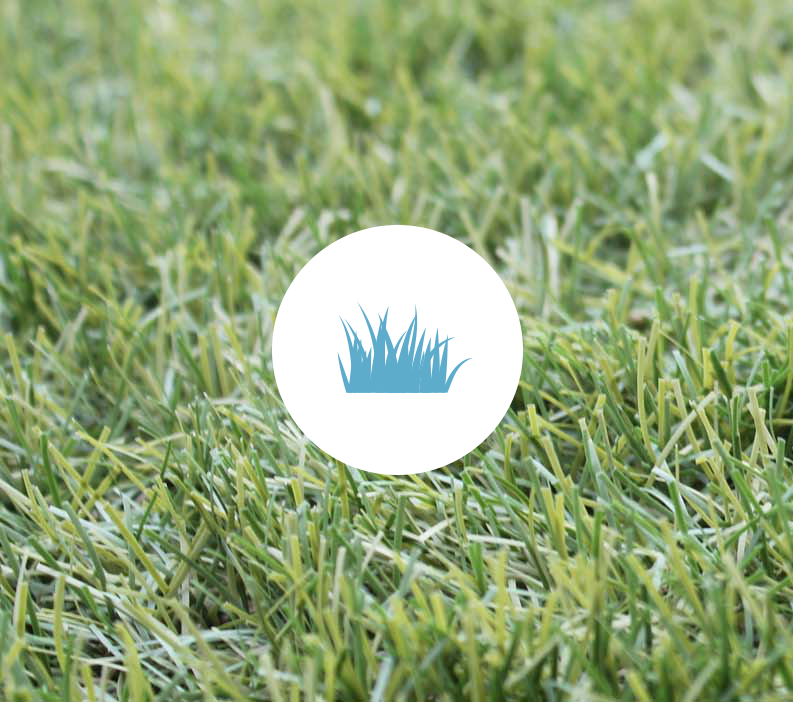 grass-2-.png