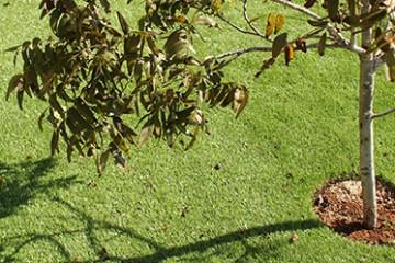 למה אנחנו בחרנו בדשא סינטטי?